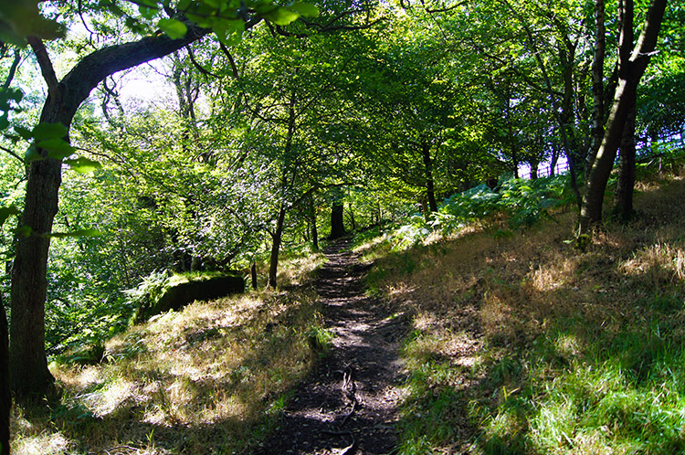 Through woodland above Turnhole Clough
