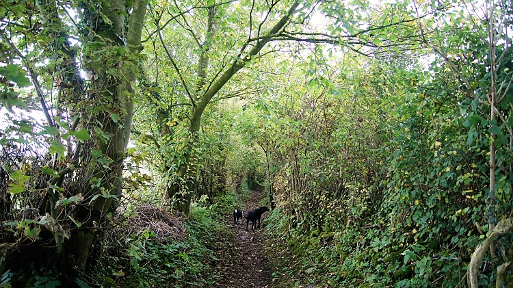 Woody trail to Sellet Mill