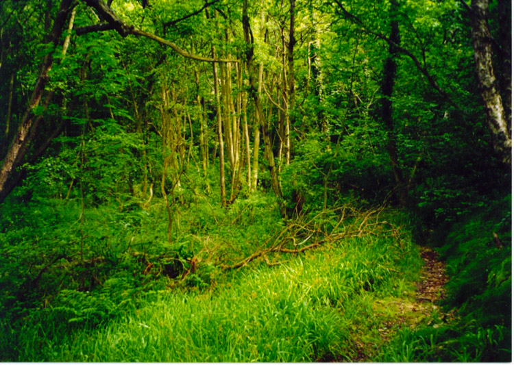 Woodland near Littlebeck
