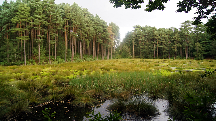 Wetland in Delamere Forest