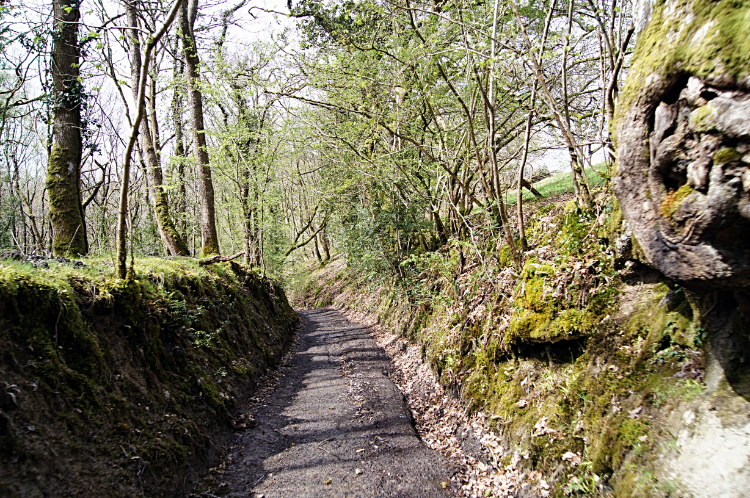 Holloway path in Llwynywormwood Park