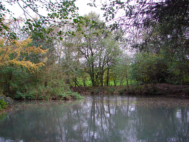 A secluded pond in Lodge Wood