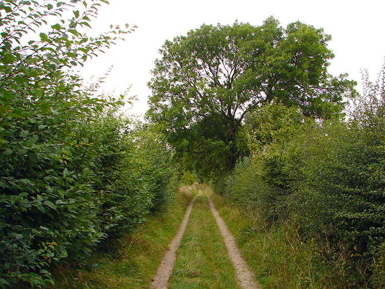 Following the leafy bridleway from Grange Farm