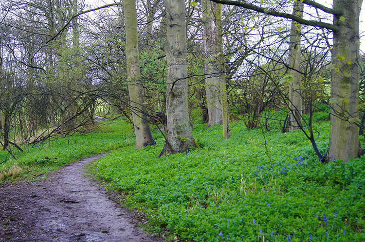 Path from Lime Kiln Wood to Sicklinghall House