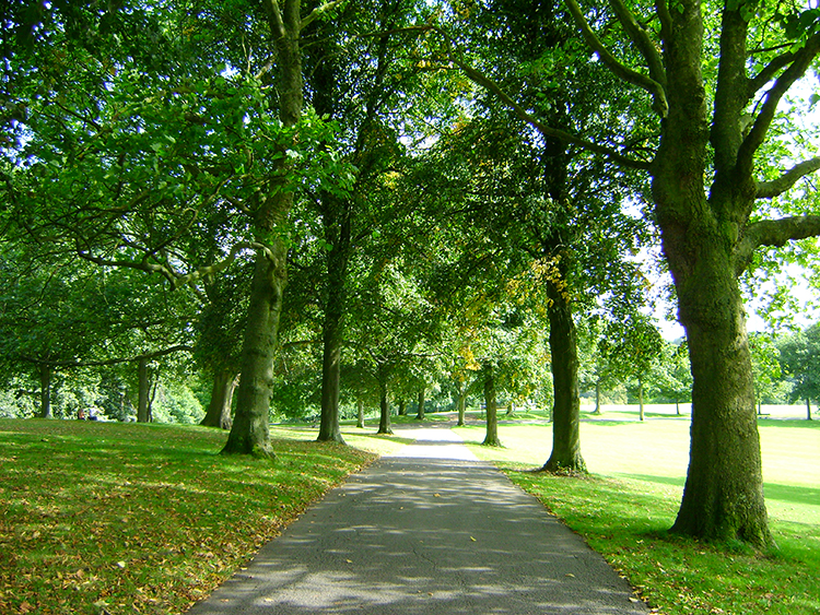 Tree lined path in Roundhay Park