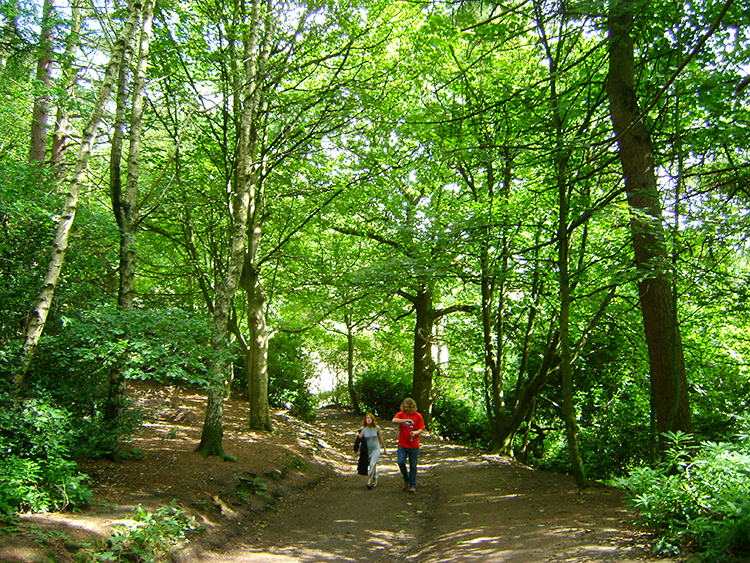 Roundhay Park Woods