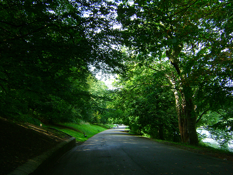 The south road in Roundhay Park