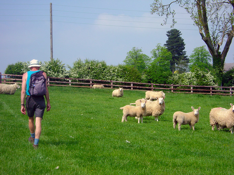 Sheep keep a keen eye on us as we near the finish