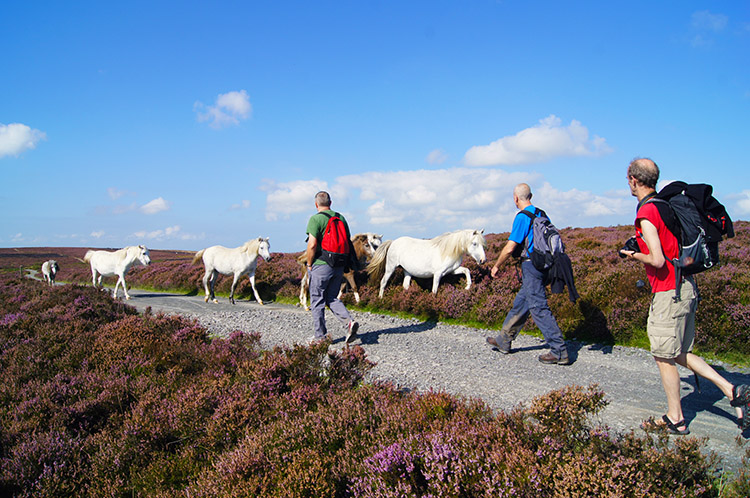 A meeting on the Long Mynd