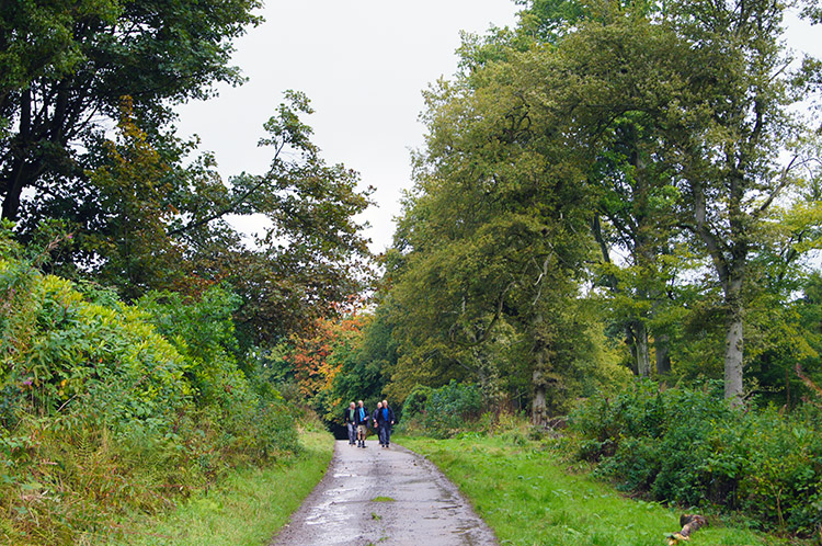 On the road to Woolers Wood