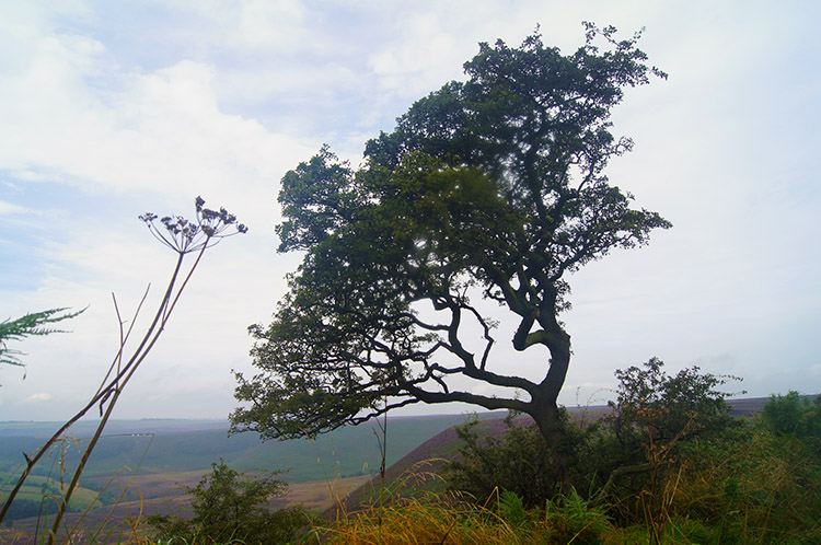 Tree on the edge of the Hole of Horcum