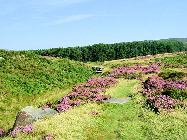 Following Burbage Brook south to Longshaw
