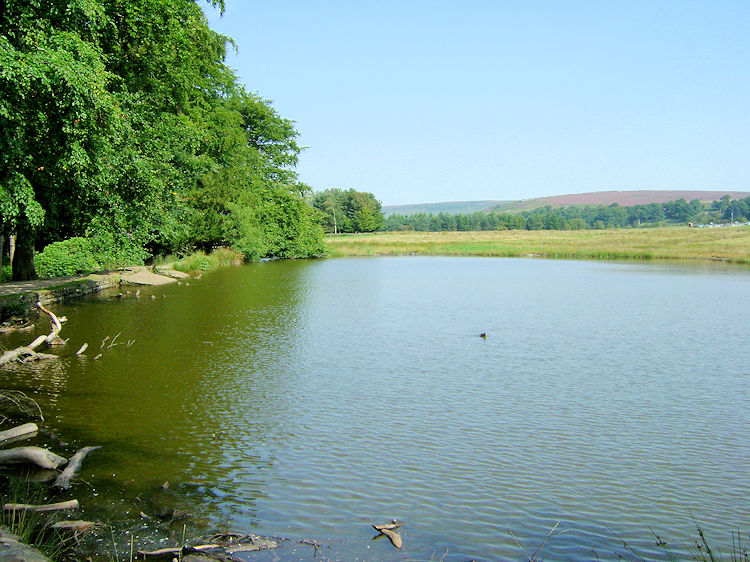 Pond in the Longshaw Estate near Granby Wood