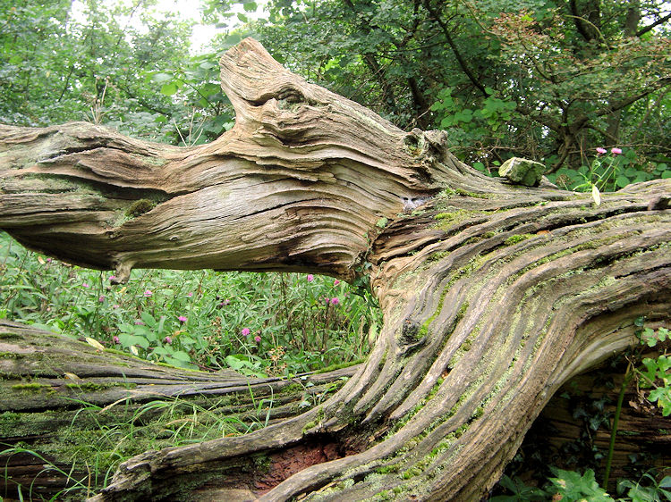 Natural Wood Sculpture