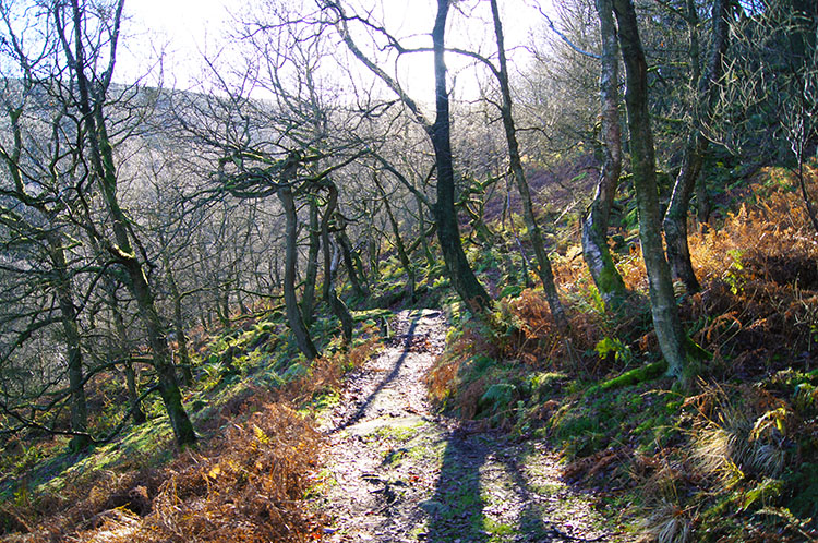 Birchen Bank Wood