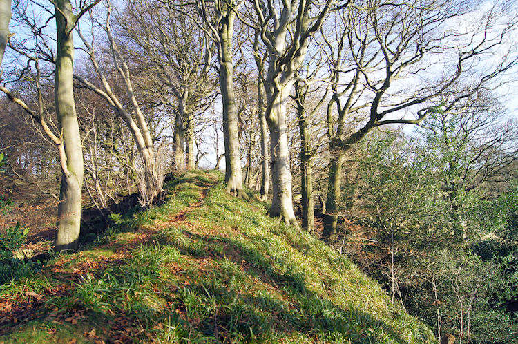 The Motte on Bailey Hill