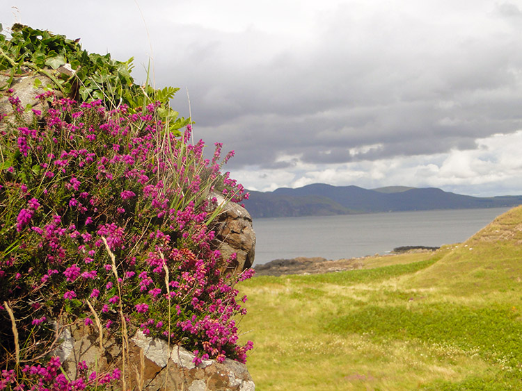 Wild flowers on Dun Ara