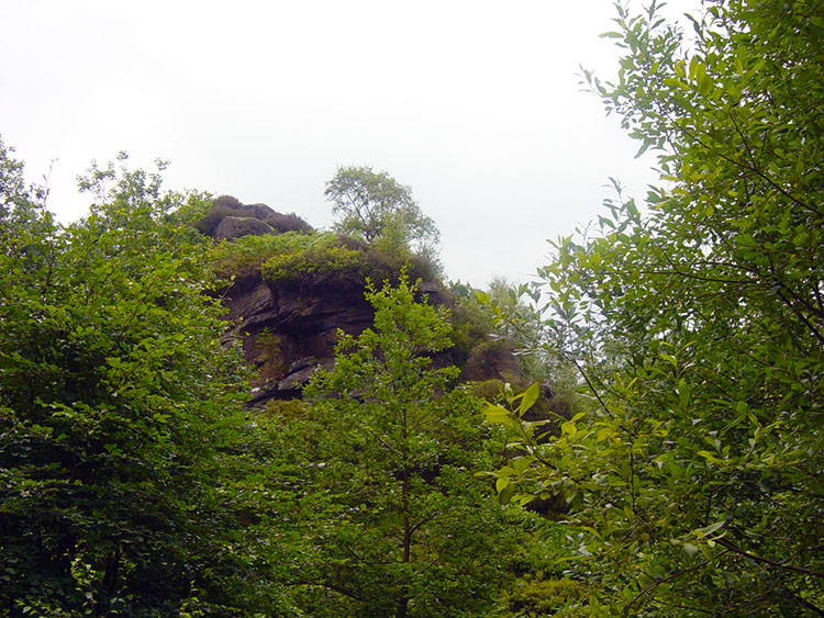 Hardcastle Crags are deeply shrouded by vegetation