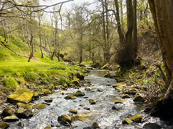 Shipley Glen is one of Bradford's natural jewels